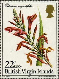 Pitcairnia angustifolia ISLAS VÍRGENES 03/03/1981
