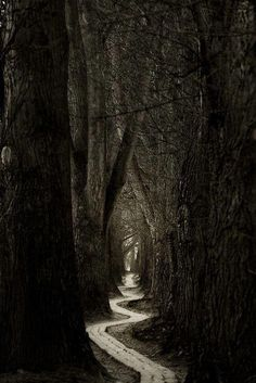 ✯ The Woods
