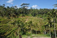 My Top Ten Things to do in Ubud, Bali