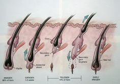 """If your part is expanding or the thickness of your ponytail is shrinking, you're likely thinking (okay, panicking) that your hair is falling out, but that's not always the case; thinning may be the culprit. """"The diameter of the hair shaft diminishes as we get older,"""" explains Zoe Draelos, M.D., clinical associate professor of dermatology at Wake Forest University School of Medicine."""