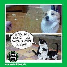 "55.3k Likes, 117 Comments - BastardiDentro (@bastardidentro) on Instagram: ""Zitti tutti! #bastardidentro #cane #gatto #ipnoticamentebastardidentro"""