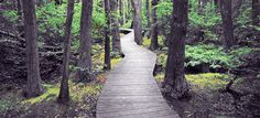 Over 100 Hiking and Walking Trails on Cape Cod