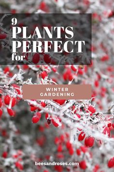 9 plants perfect for the winter garden- 9 plants perfect for the winter garden . - 9 plants perfect for the winter garden – 9 plants perfect for the winter garden – wintergarden - garden photography Cold Climate Gardening, Organic Gardening, Gardening Tips, Lily Care, Gardening Photography, Cold Frame, Garden Quotes, Garden Care, Winter Garden