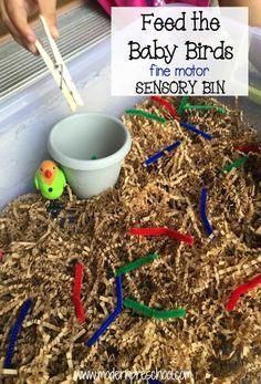 Baby Bird Eats the Worm! {fine motor sensory bin}