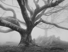 Tree Photography, Creative Photography, Forest Landscape, Landscape Art, Spooky Trees, Gothic Horror, Tree Forest, Tree Leaves, Photo Tree