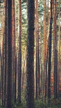 Wood Tree Mountain Summer Nature Green  #iPhone #5s #wallpaper
