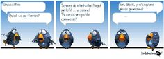 Les Birds Dessinés