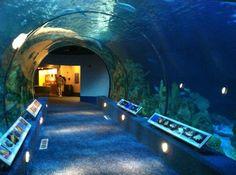 Need to take the kiddos there!    The Aquarium at Moody Gardens, Galveston. photo by Fazia Rizvi.