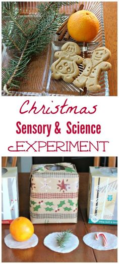 Such a fun hands-on Christmas science & sensory activity -- great for kids of all ages!  So easy to set up & do for sense of smell experiment!