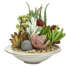 1.8-Pint Mixed Cacti (Al001) Nursery