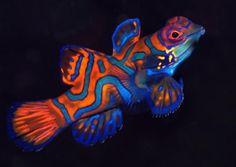 Peces en el fondo del mar 8