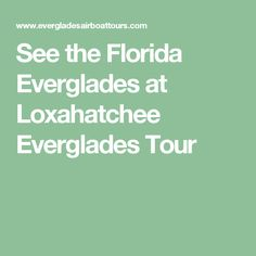 See the Florida Everglades at Loxahatchee Everglades Tour