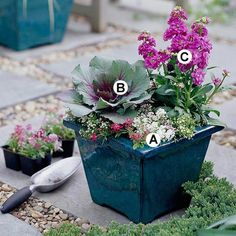 Even just a couple of plants create stunning flower container ideas. This one offers a bonus of the strong fragrance of the flowering stock. 'Wonderland Mulberry Mix' sweet alyssum B. 'Osaka Purple' flowering kale C. Fall Container Plants, Fall Containers, Container Flowers, Container Gardening, Vegetable Gardening, Flowering Kale, Ornamental Cabbage, Fall Planters, Gardens