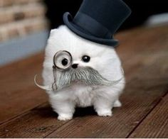 Puppy with a mustache, tophat and monocle... no explanation needed.