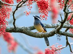 belleza de la naturaleza.
