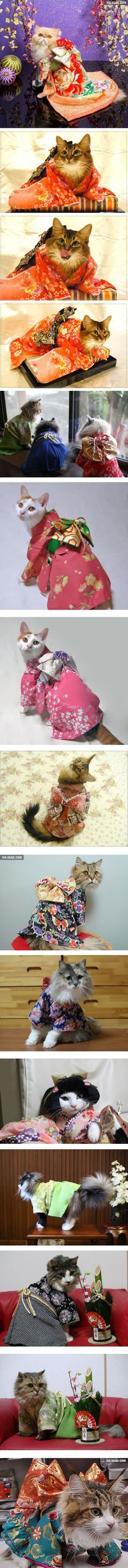 The world of lovely cats in kimonos