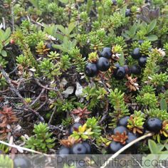 Crowberries from Alaska tested highest in antioxidants when compared to 9 other berries.