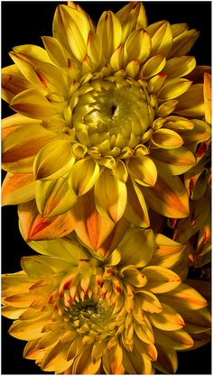 Sample flower suggested. Like the concept of sunlit hues for an Oct sunset wedding tho this may be too yellow ===== Golden Dahlias