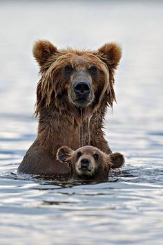 I love bears,they are SOO beautiful,but scary