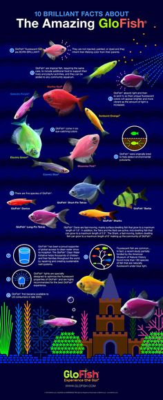 35+ Different Types of Guppies In The World With Beautiful ...
