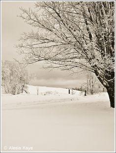 Christmas morning snow - Coos County, NH