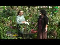 Îngrijirea orhideelor ca la carte - YouTube Make It Yourself, Flowers, Youtube, Gardening, Decor, Interiors, Horticulture, Plant, Cards