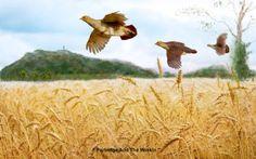 Grey Partridge and the Wrekin in Shropshire. Grey Partridge, Camel, Animals, Animales, Animaux, Camels, Animal, Animais, Partridge