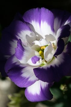 Purple and white flower..