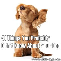 41 Things You Probably Didn't Know About Your Dog	►►	http://lovable-dogs.com/41-things-you-probably-didnt-know-about-your-dog/?i=p