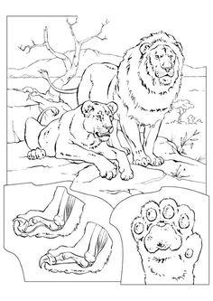 Coloriage lion et lionne