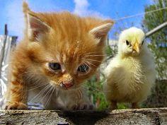 Een poesje en een kuiken genieten samen van de lente.