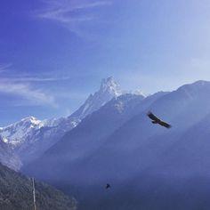 #TrainerTrack Nepal Tag 7: Machapuchare und Nepalesischer Steinadler.