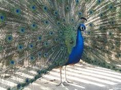 Resultado de imagem para Heron Rached Julieta Bouharb