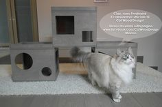 Ciao a tutti da Ferdinand, il collaudatore di Cat Wood Design