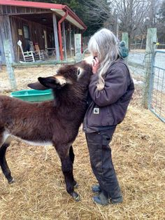 Kisses, kisses, kisses, kisses......KISSES!!! Courtesy: Lake Nowhere Mule and Donkey Farm. Martin, TN (USA).