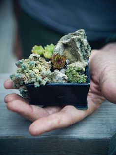 I'm all about the mini gardens right now. Tiny succulent garden here is cute.