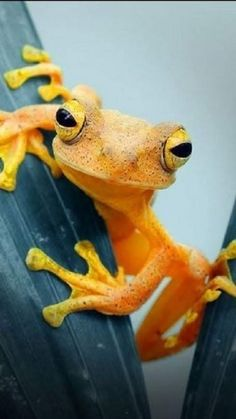 Frog Closeup, HD Animals Wallpapers Photos and Pictures - Funny Frogs, Cute Frogs, Cute Reptiles, Reptiles And Amphibians, Animals Beautiful, Cute Animals, Baby Animals, Frosch Illustration, Regard Animal