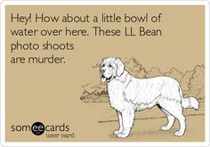 Hey! How about a little bowl of water over here. These LL Bean photo shoots are murder. | Family Ecard