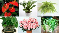 Estas 15 plantas son una BOMBA de puro oxígeno, con solo una purificaras el aire de tu casaTodas estas plantas son bombas de oxígeno, por lo menos con una de ellas el aire en tu casa se limpiará y quedará totalmente purificado. ¿Cuál de ellas tienes en tu casa?