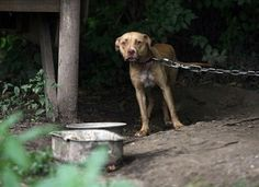 Support Strict Punishment for Animal Abuse. Alabama prop to make cruelty a felony