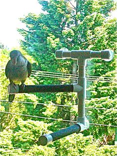 SHOWER and WINDOW bird parrot double PERCH by TheBirdPerchPalace