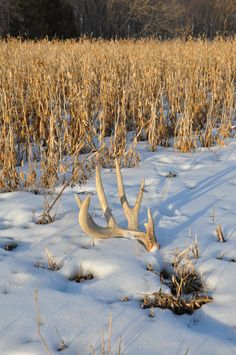 There are two basic parts of shed hunting: scouting and execution.....Read this tip and more at Living Legendary | The Hunting Community