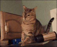 【GIF】イッヌ「なんやあいつら楽しそうやな…せや!」