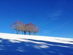 Arbres, Aubrac, Aveyron ©cdt12-AW