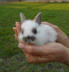 I've been told only crazy girls get bunnies for pets... I don't quite understand that statement... I don't really care either because this picture makes me want a bunny! Okay, I don't *actually* want a bunny... But it is adorable! I want to snuggle him!
