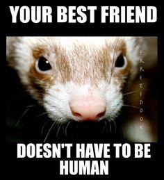 I love my ferret