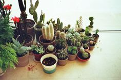 Cactus and succulents.