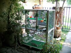 83 Best Iguana Cage Images Iguanas Reptile Cage Pets