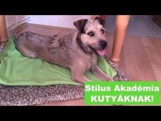 Heti Kutya - YouTube