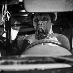 Elliott Erwitt – Dogs -repinned by Los Angeles County & Orange County portrait studio http://LinneaLenkus.com  #photographers